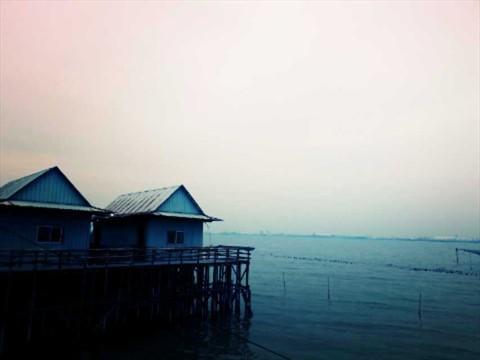 海鸥岛-红树林